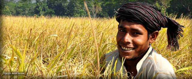 bangladesh-rice-harvest-farmer